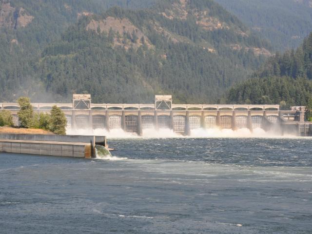 Bonneville Dam & Fish Ladder Tours
