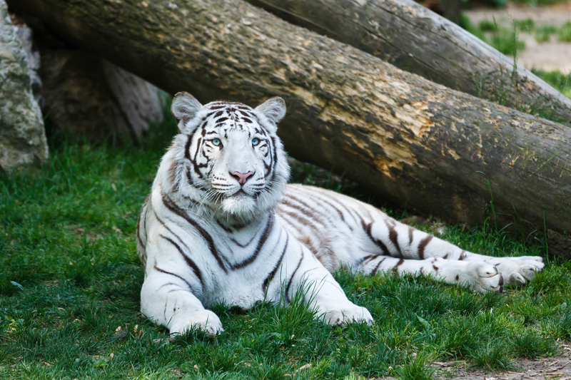 coolest parks in Washington State | Cat Tales Zoological Park