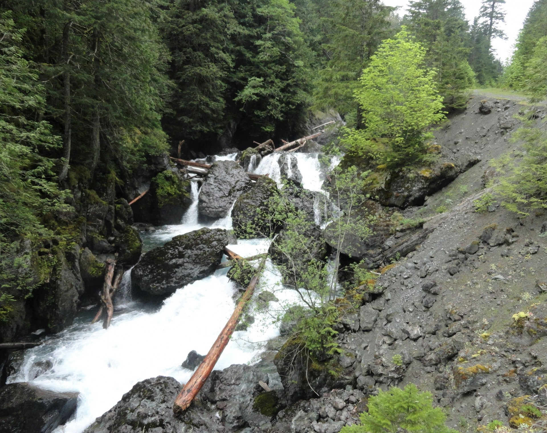 ScenicWA | Best Things to Do in Washington State | Dosewallips Falls