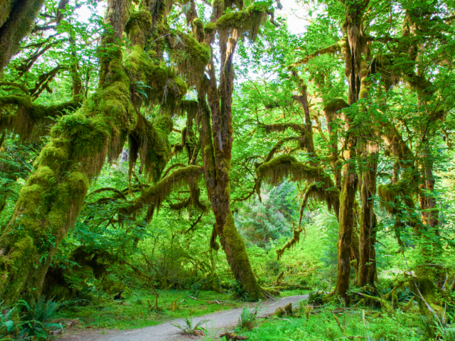 must beautiful forests in Washington State