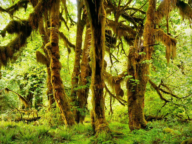 must see places in Washington State | Hoh Rain Forest