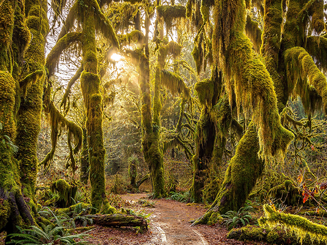 ScenicWA | 365 Things to Do in Washington State | Hoh Rainforest
