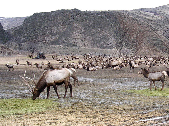 Scenic WA | Best Things to Do in Washington State | Oak Creek Wildlife Feeding Area