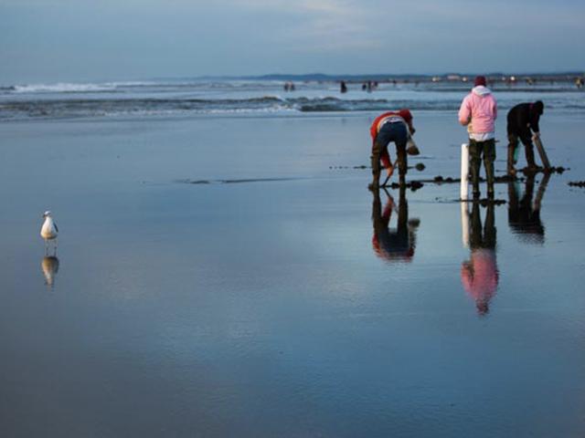 Ocean Shores 7