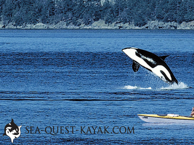 Sea Quest Kayak Tours 1