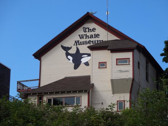The Whale Museum 1