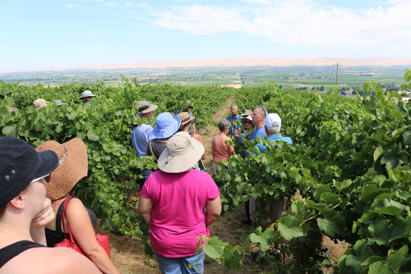 ScenicWA | Best Things to Do in Washington State | Wineries Express
