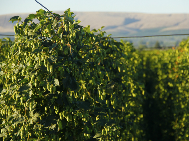 Yakima Valley VCB 2